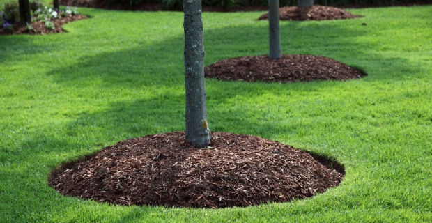 Mulch Installation for your Landscape plant beds