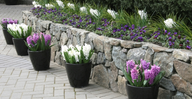 Spring Flower Installation and Delivery from Carmel Landscapers