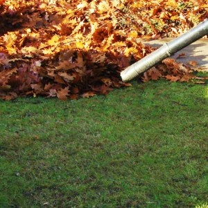 Fall Leaf Removal and Clean-up