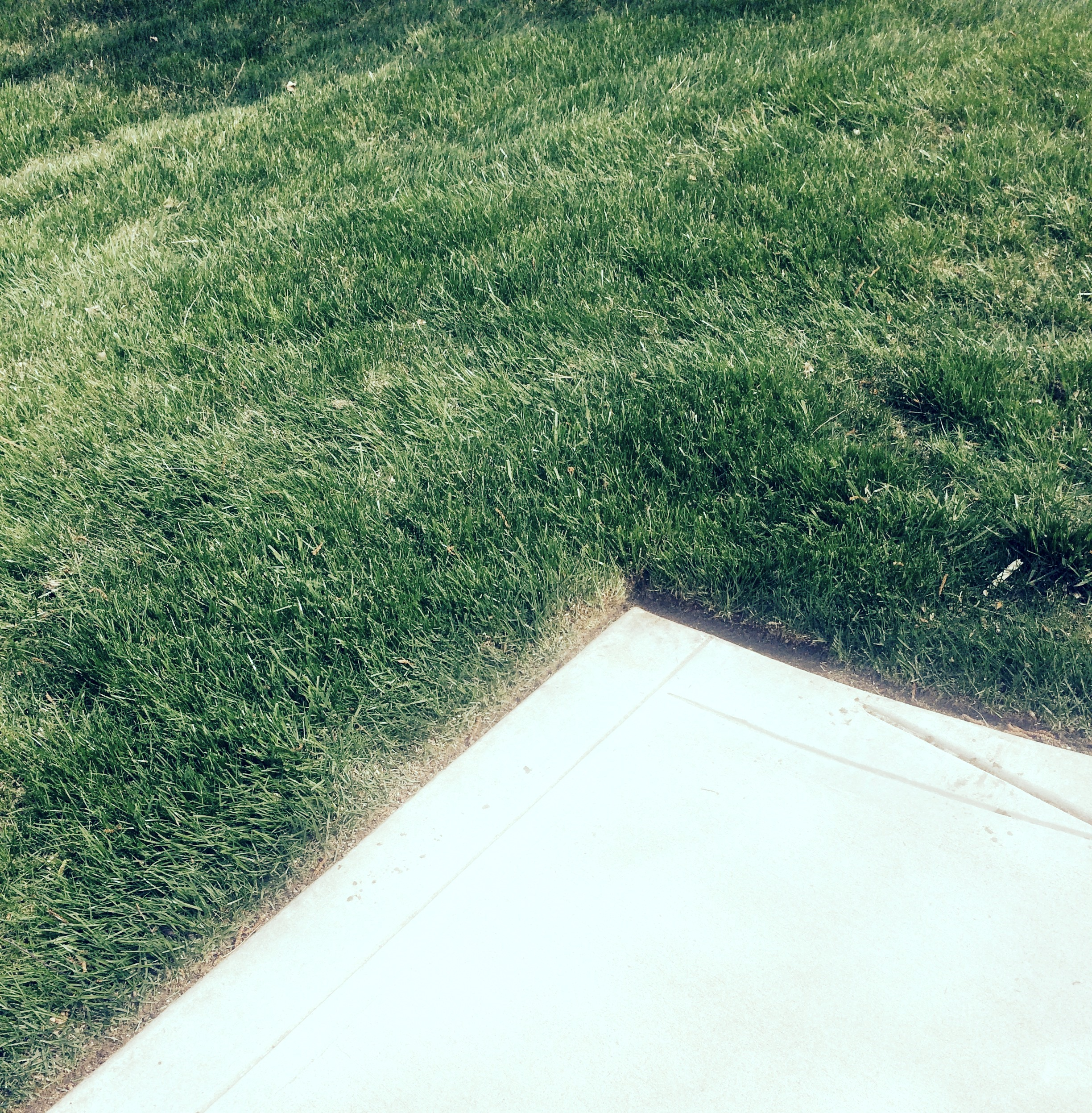 Lawn Edging Carmel Landscaper