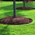 mulch-bed-cut-landscape-mulching-carmel-fishers-indianapolis-fortville-giest-noblesville