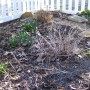 spring-clean-up-prunning-plants-landscaping-carmel-fishers-indianapolis-fortville-mccordsville