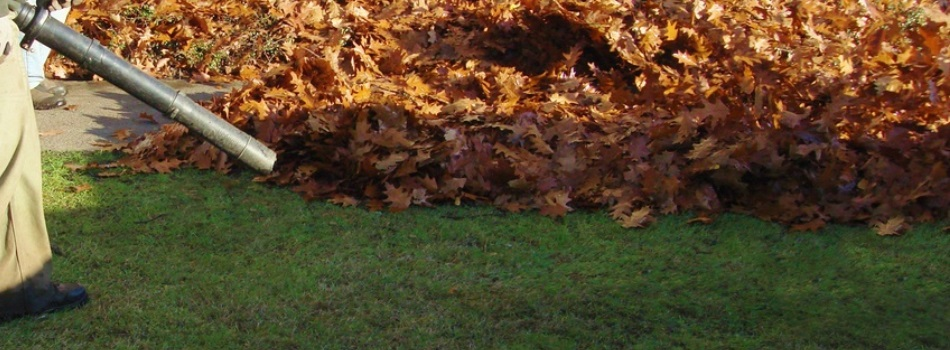 leaf-removal-services-fall-carmel-landscaper-fishers-noblesville